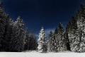 WinterEvergreens