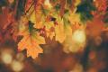 Thanksgivingtimothy-eberly-yuiJO6bvHi4-unsplash
